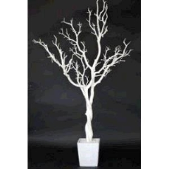 Rental store for TREE, POTTED WHITE in Baton Rouge LA